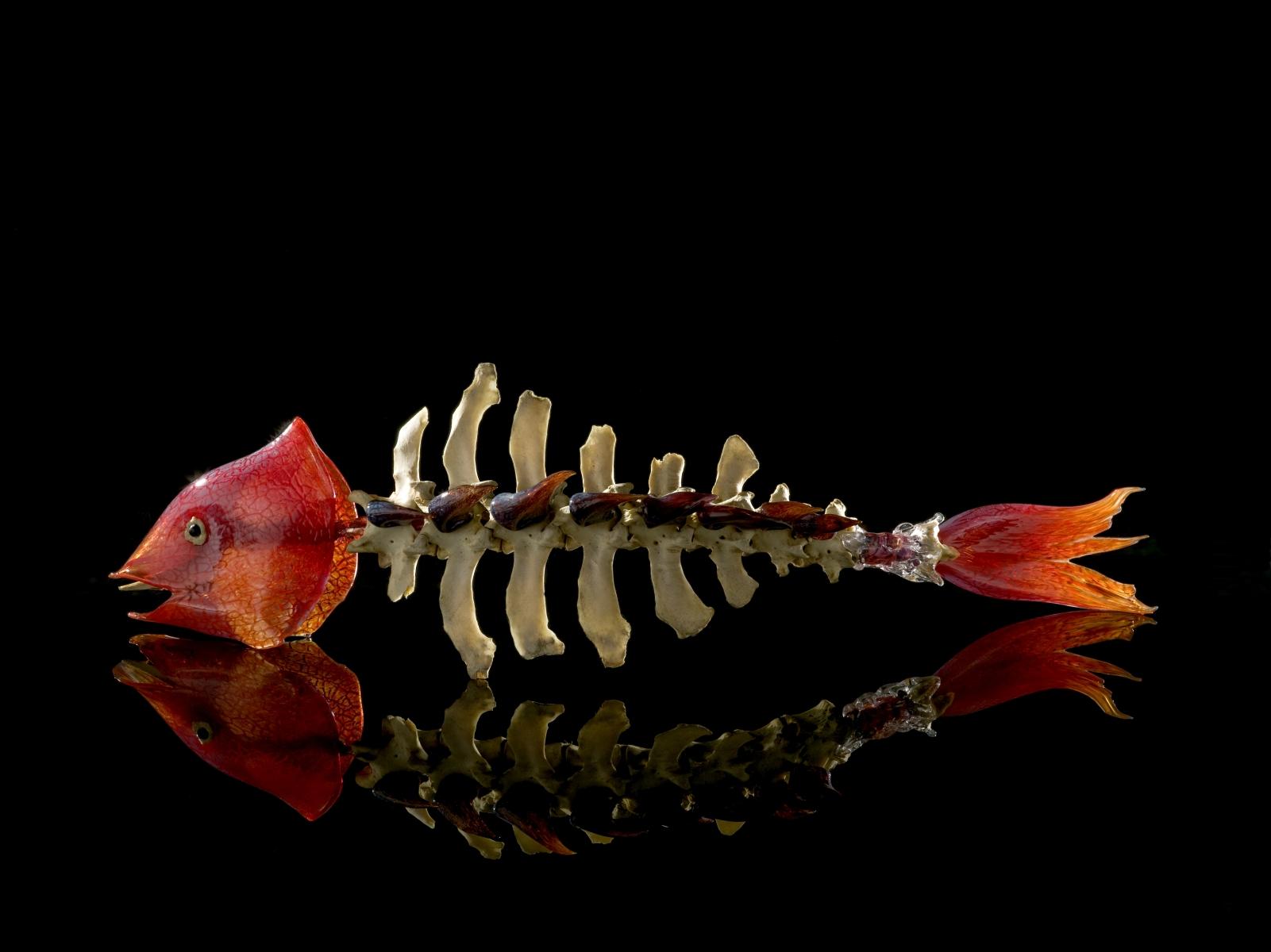 Sleepless Nights of Golden Fish